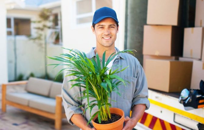 Professional moving services, remover carrying a plant